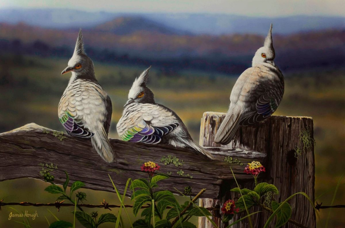 A Winter Afternoon Top Knot Pigeon painting by James Hough