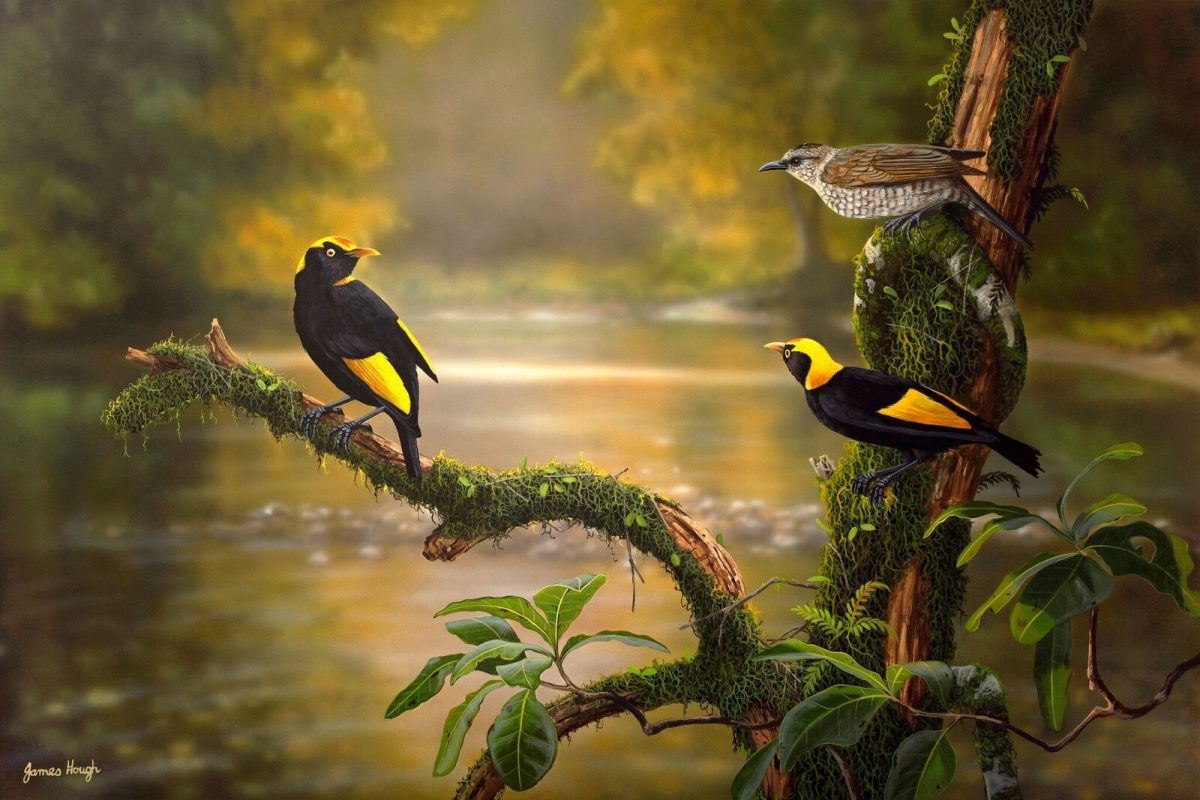 All that Glitters Regent Bowerbird painting by James Hough