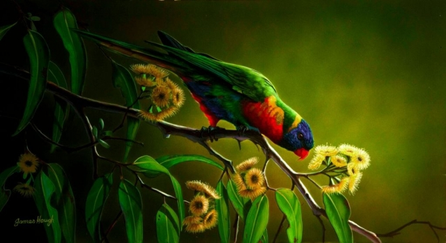 Eating ALone Lorikeet painting by James Hough