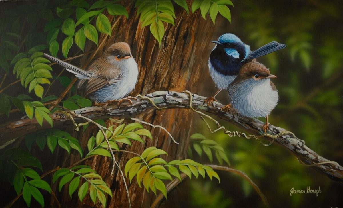 Family Ties Fairy Wren painting by James Hough