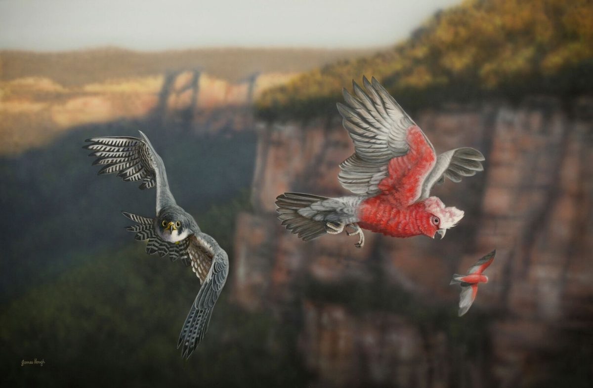 Hot on the Tail Hawk and Galah painting by James Hough