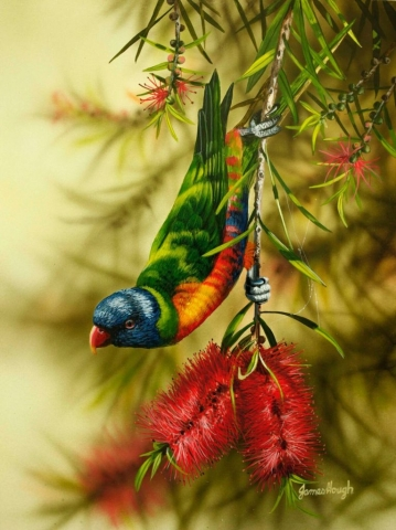 Lorikeet on Bottlebrush Painting by James Hough