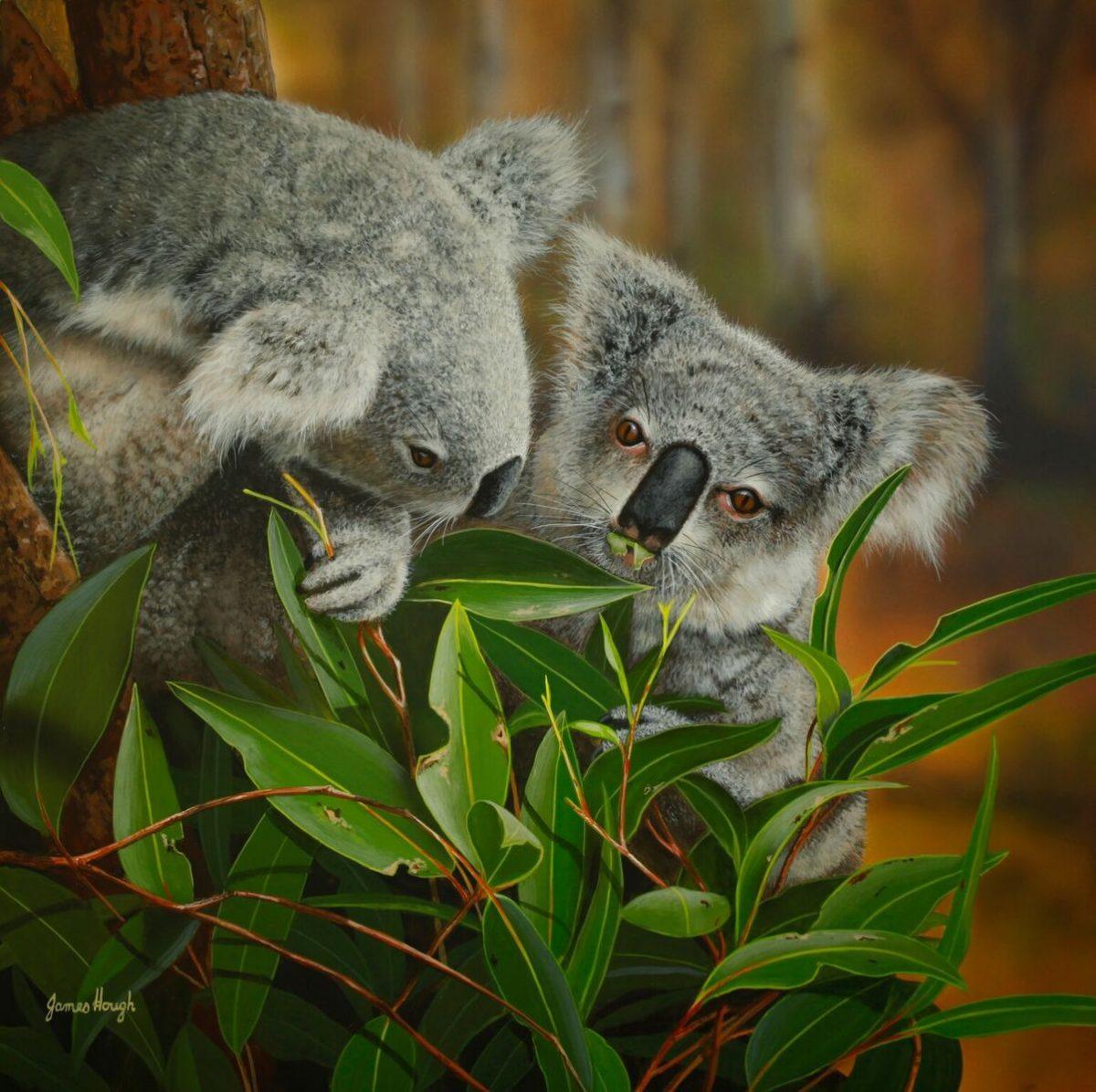 Koala Painting Painting James Hough