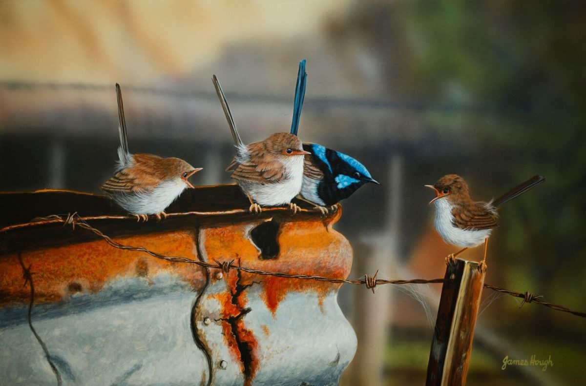 Fairy Wrens painting by James Hough