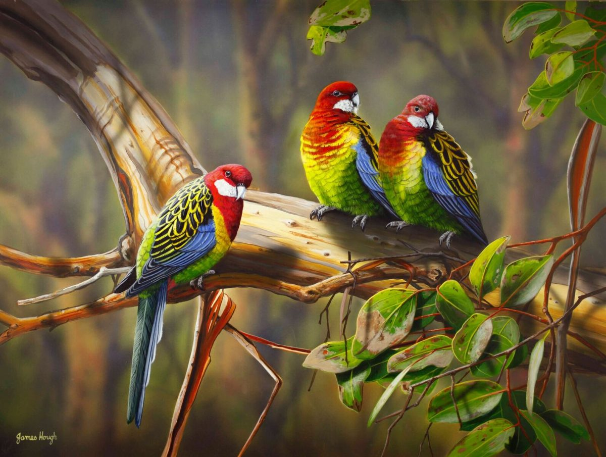 Match Making Rosella painting by James Hough