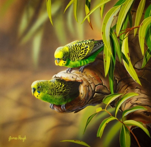 Maternity Ward Budgerigar painting by James Hough