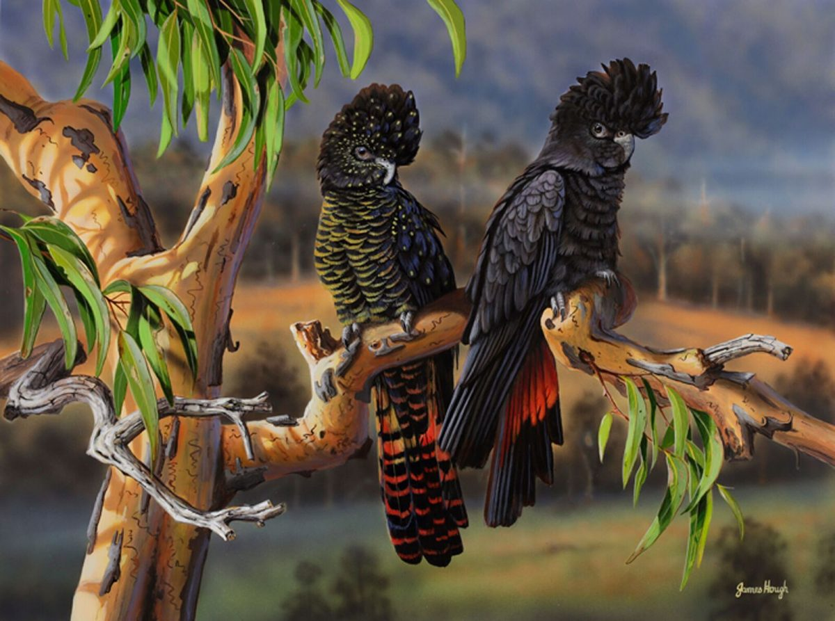 Overnight parking Black cockatoos painting by James Hough