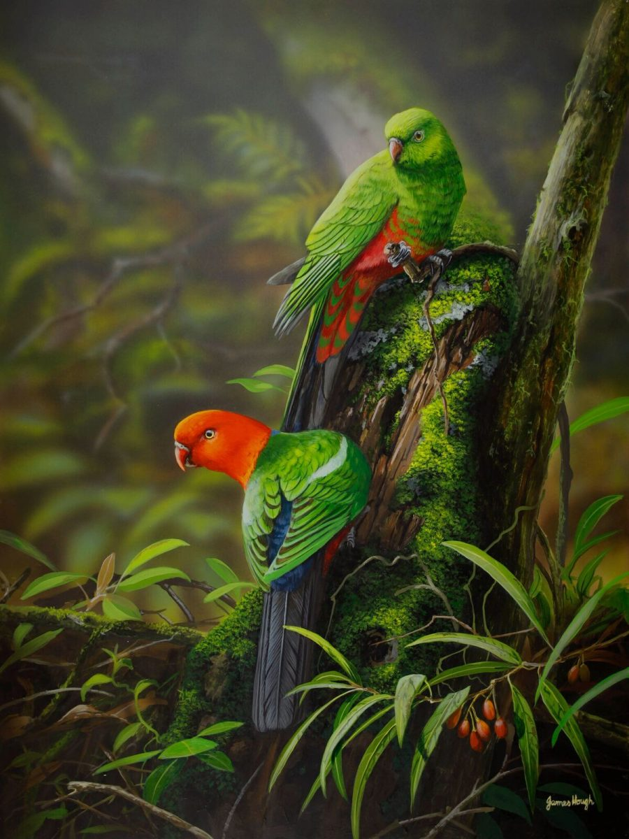 Rainforest foragers parrots painting by James Hough