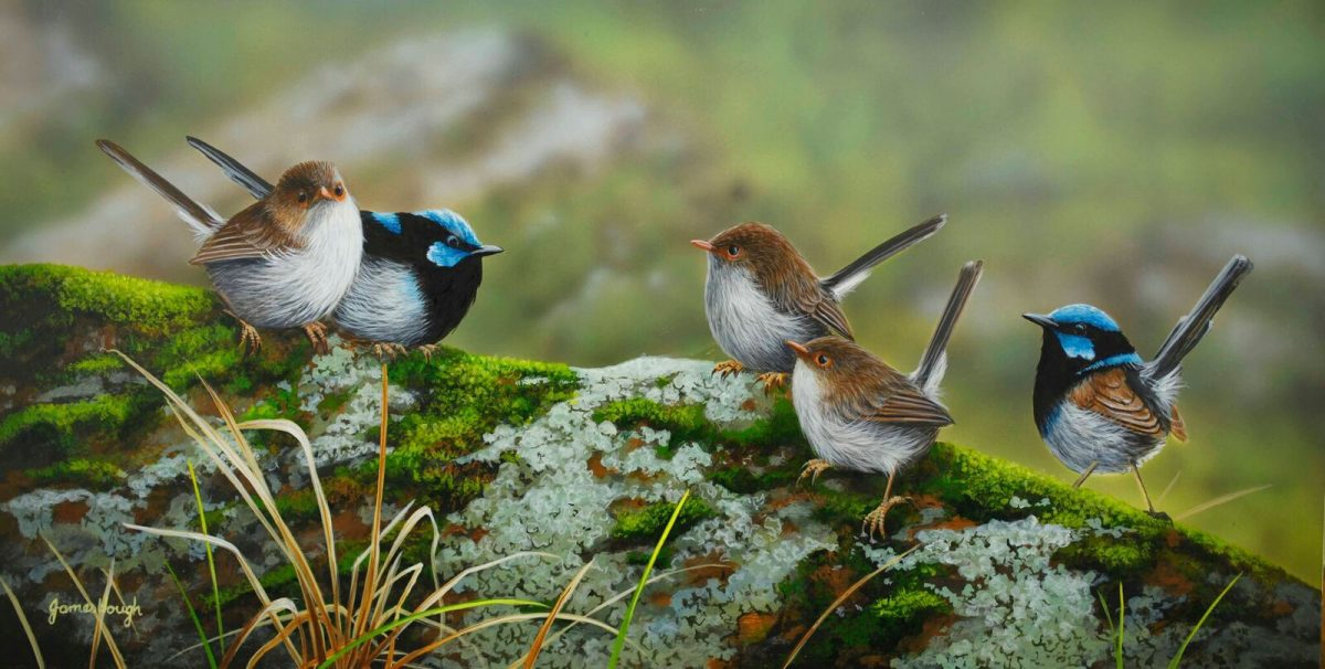 Superb Fairy Wrens painting by James Hough