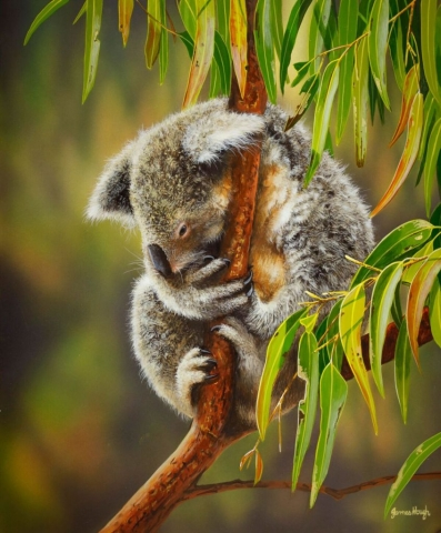 Tree top sleep Koala Painting James Hough
