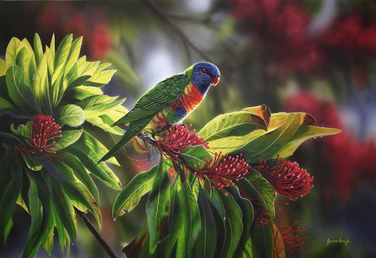 Tropical delights lorikeet painting by James Hough