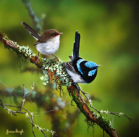 Two Eyes Fairy Wrens painting by James Hough