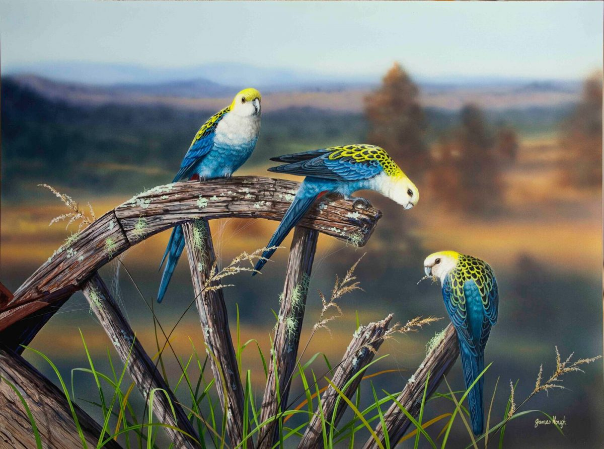 Pale heads parrots painting by James Hough