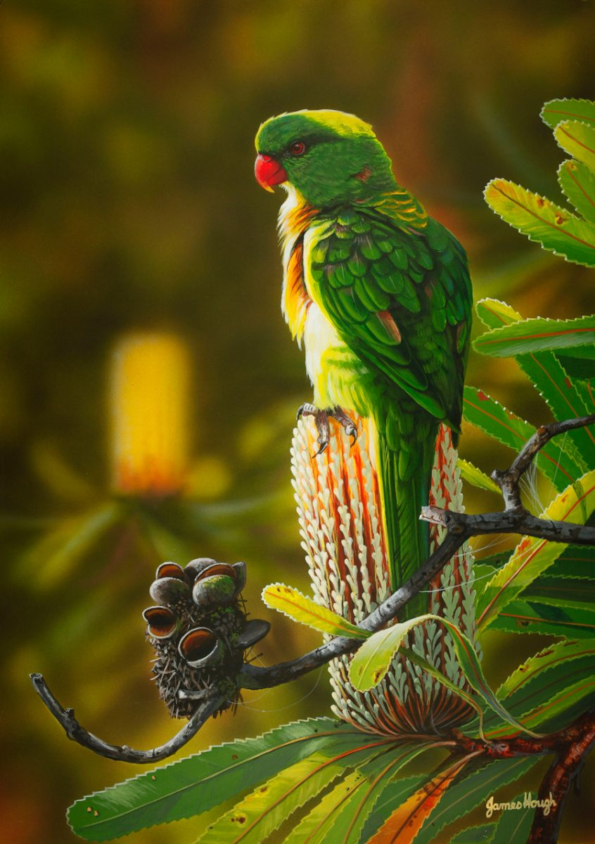 """""""Atop Old Man Banksia"""" - Scaley Breasted Lorikeet Painting by James Hough"""