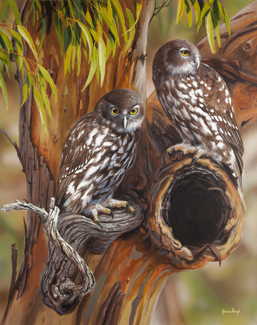 """""""Homemakers"""" - Barking Owls Painting by James Hough"""