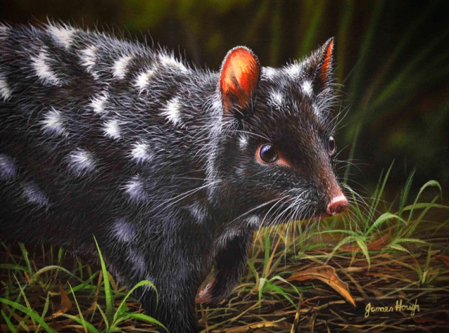 """""""Listen In"""" - Black Eastern Quoll Painting by James Hough"""