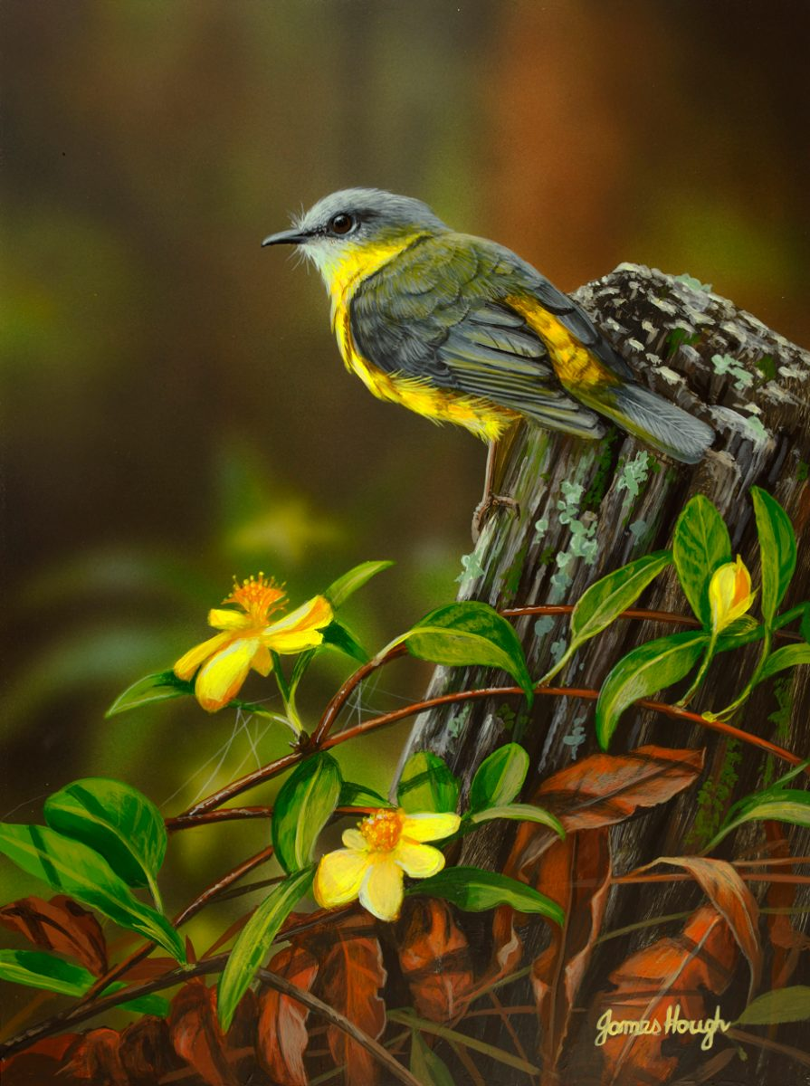 """Matching Guinea Flowers"" - Eastern Yellow Robin by James Hough"