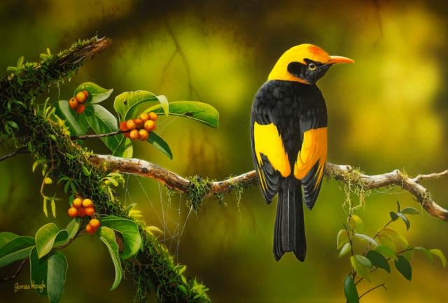 """""""Rainforest Gold"""" - Regent Bowerbird Painting by James Hough"""