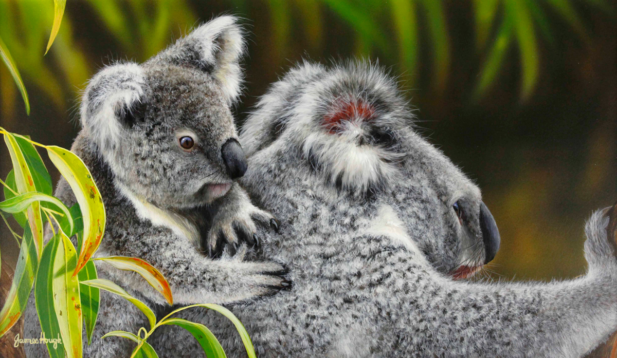 """The Passenger"" - Koala and Cub Painting by James Hough"
