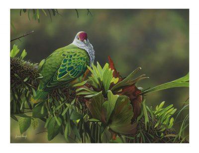 11855 James Hough Rainforest Solitude